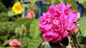 my mother u0027s flower garden in another minute week 169 youtube