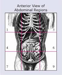 Planes And Anatomical Directions Worksheet Answers Anatomical Terms Meaning Anatomy Regions Planes Areas Directions
