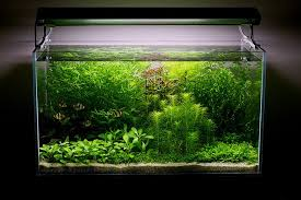 Aquascape Design Layout Aquarium August 2011