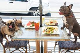 best pet friendly restaurants and bars in long beach locale magazine