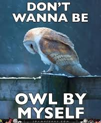 Lonely Meme - sad owl meme feels the loneliness of a cold night