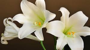 floral memories of easter