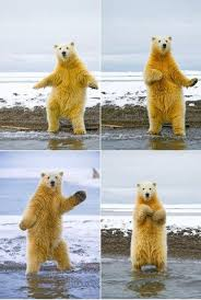 the polar bear can dance looks like where they got the idea for