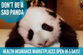 Meme Cute - cute animals promote adorable care act obamacare ny daily news