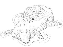 realistic saltwater fish coloring pages saltwater fish coloring
