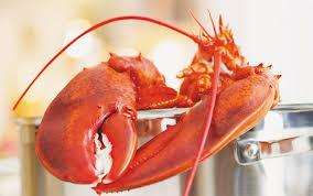 comment cuisiner un homard cuire un homard ricardo