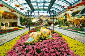 Bellagio Botanical Garden Into With And Splendor At Bellagio S Conservatory
