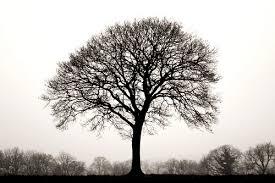 ten thousand trees black and white lone tree