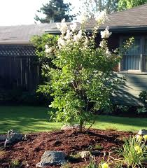 small landscaping trees wonderful small front yard trees tittle