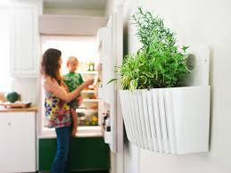 wall garden indoor living walls bring container gardening indoors hgtv