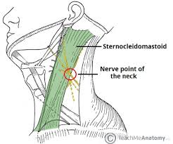the cervical plexus spinal nerves branches teachmeanatomy