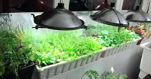 grow light indoor garden best light for growing plants indoors indoor gardens best grow light
