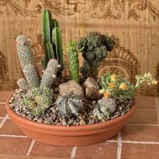 Dish Garden Ideas Create A Desert Dish Garden Midwest Living