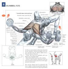 Chest Workout Dumbbells No Bench Anatomy Of A Workout Chest Workout Join Our Community At Https