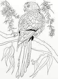 parrot coloring pages australian parrot coloring page pg 3 by lorrainekelly on deviantart