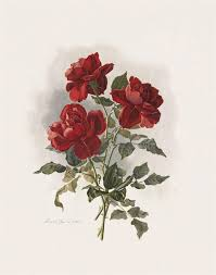 red public hair pics 1986 best rose images on pinterest paint etchings and flowers
