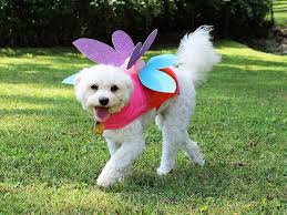 19 diy pet costumes for halloween hgtv
