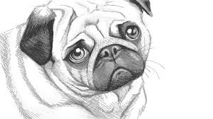 pug doodle ly