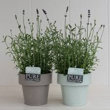pure collection plant u0026 care