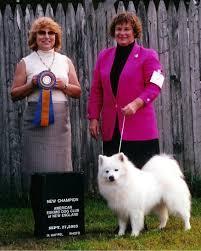 american eskimo dog ontario american eskimo dog breeders wachusett american eskimos