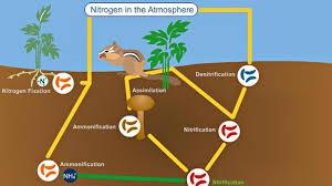 the nitrogen cycle science interactive pbs learningmedia