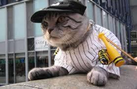 Halloween Costumes Cats Halloween Costume Cat Kittentoob