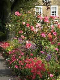 Types Of Gardening Plants 30 Ways To Incorporate Roses Into Your Backyard
