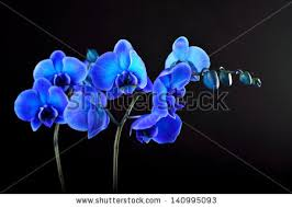 Blue Orchid Flower Orchid Flower Images Free Stock Photos Download 11 063 Free Stock