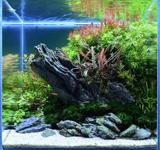 Aquascape Canada 134 Best Aquascaping Norm Images On Pinterest Aquarium Ideas