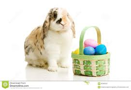 real easter bunny stock photos images u0026 pictures 247 images