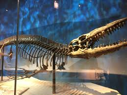 perot museum water dinosaur skeleton dallas my