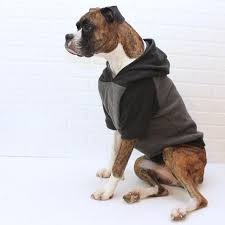 best 25 dog hoodie ideas on pinterest dachshund sweater puppy