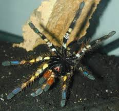 158 best spiders and tarantulas images on insects