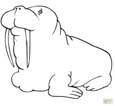 coloring pages elegant walrus coloring cute baby pages