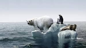 polar bears and global warming for kids u2013 adorable bears