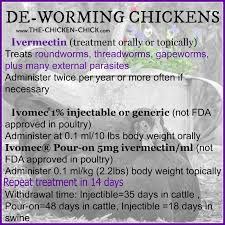 Benefits Of Backyard Chickens by Control U0026 Treatment Of Worms In Chickens Chicken Chick Backyard