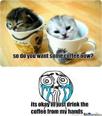 Cute Kittens Meme - cute kittens by nyangrumpycat12 meme center