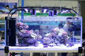led reef lighting reviews marine aquarium lighting px reef aquarium lighting reviews crypdist