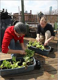 how to plant an urban vegetable garden boston com