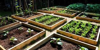 vegetable garden garden dad