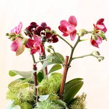 flower orchid house happy orchids will thrive in your home no greenhouse needed