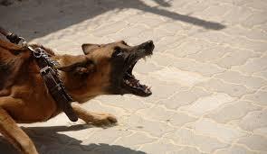 australian shepherd kills child family dog attacks 4 year old texas boy mauls him to death