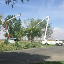 discount tree service tree services palm desert ca phone