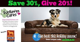 cat with australian shepherd support australia cattle dog rescue with furhaven cares enjoy 30