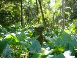 Tropical Dry Forest Animals And Plants - ancient guam u0027s environment