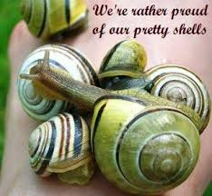 Where Can You Find Snails In Your Backyard Slug And Snail Control Natural Organic Ways To Deter And Kill