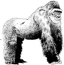 coloring page of gorilla coloring gorilla coloring page