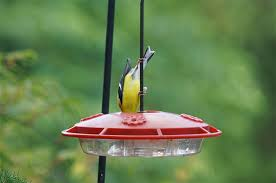 Hummingbird On A Flower - 13 questions about hummingbird feeders answered by the pros