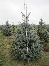 img 1099 premier trees