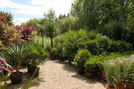 native plant nursery ontario uncategorized darxxidecom